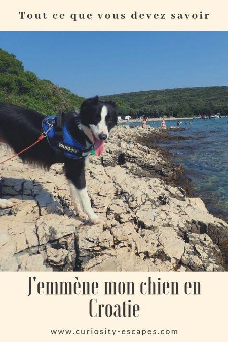 Le guide complet pour voyager avec son chien en Croatie: préparatifs et questions-réponses