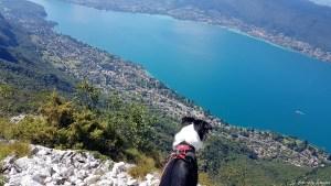 Chien au sommet du lac d'Annecy