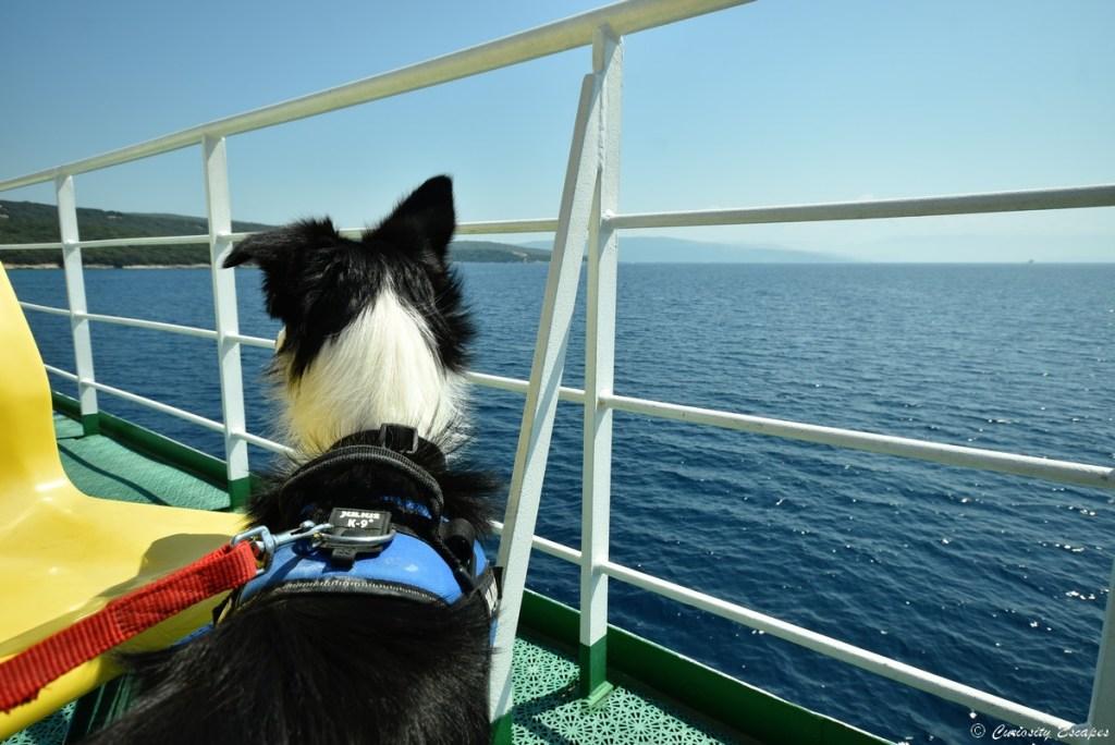 Chien sur le ferry en Croatie
