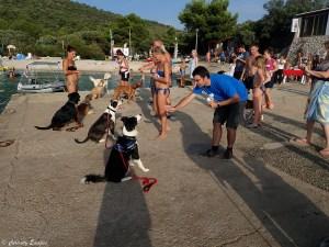 Jeux pour chiens au camping en Croatie