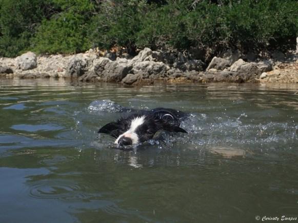 Chien apprend à nager en Croatie
