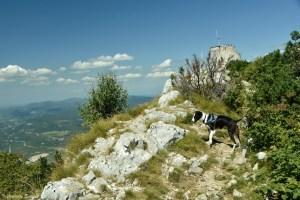 Visiter les parcs nationaux de Croatie avec son chien
