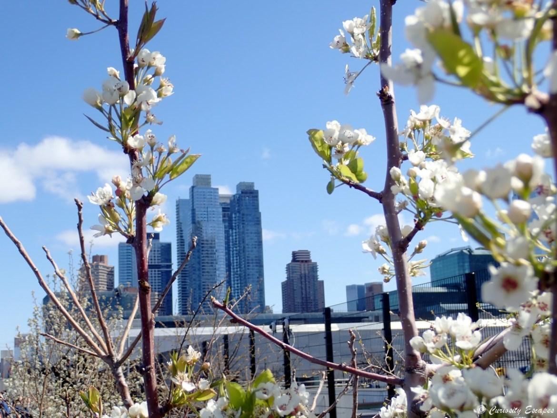 Gratte-ciel vue depuis la High Line, New-York