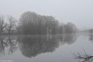 Etang de Boulieu en hiver sous la brume