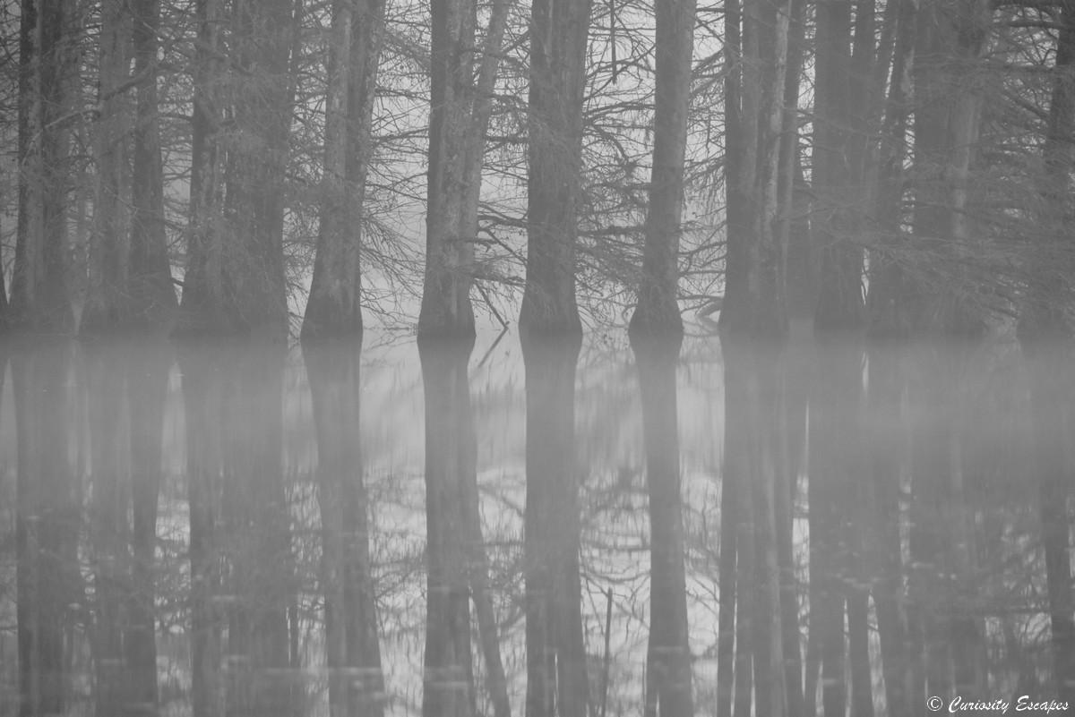 Effetto specchio del cypress calvo sotto la nebbia