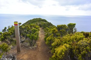 Randonnée Monte da Guia sur Faial, Açores
