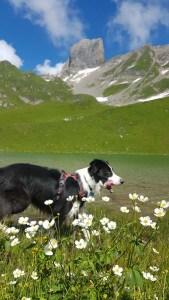 Fleurs des montagnes, Savoie