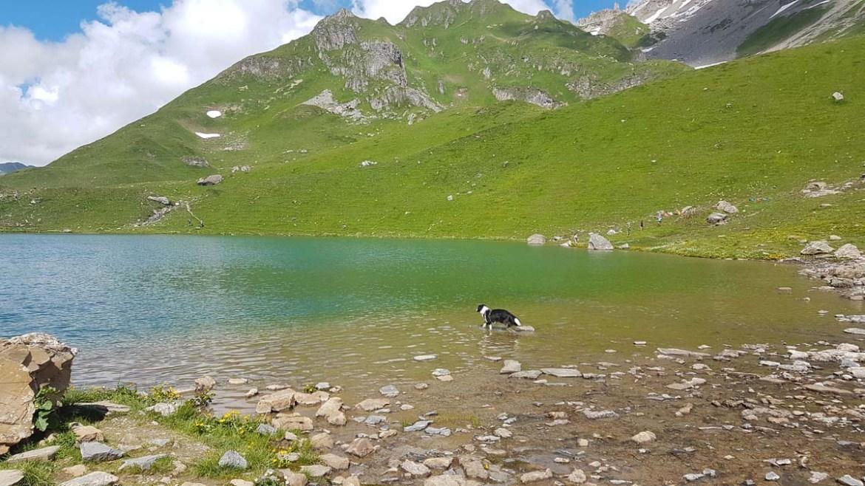 Chien dans le lac d'Amour, Savoie