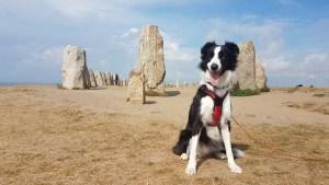 Visiter les mégalithes d'Ales Stenar avec son chien