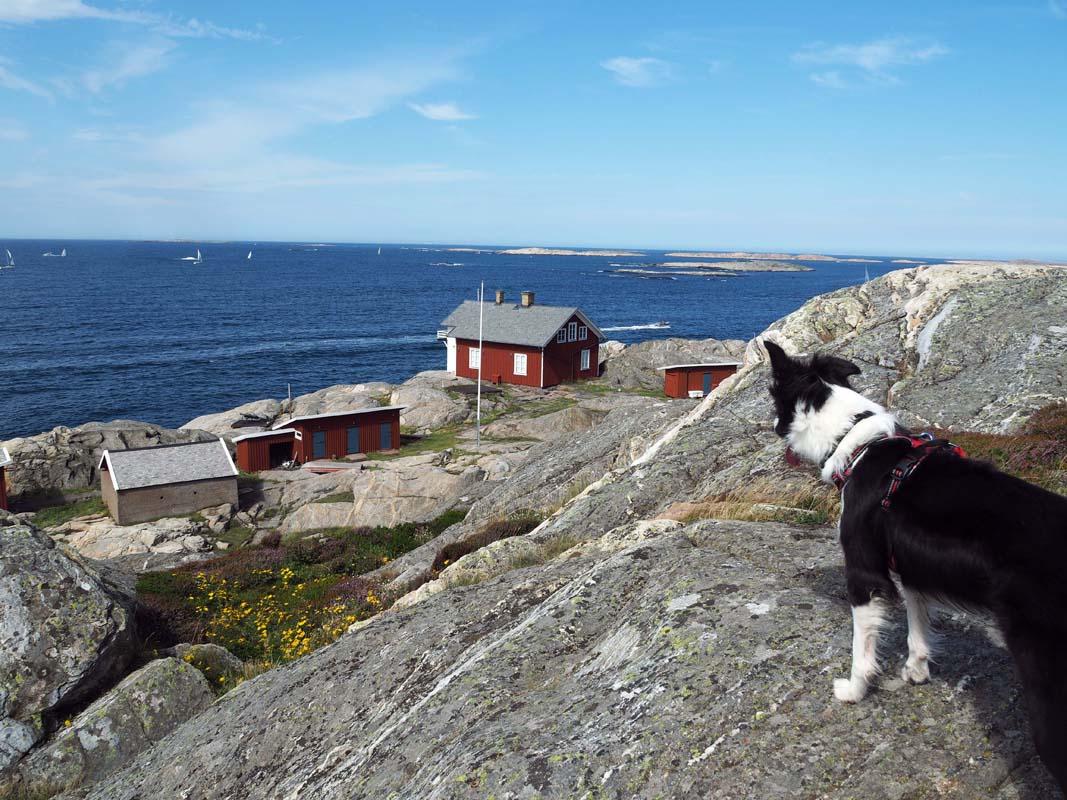Randonner avec son chien sur la côte suédoise