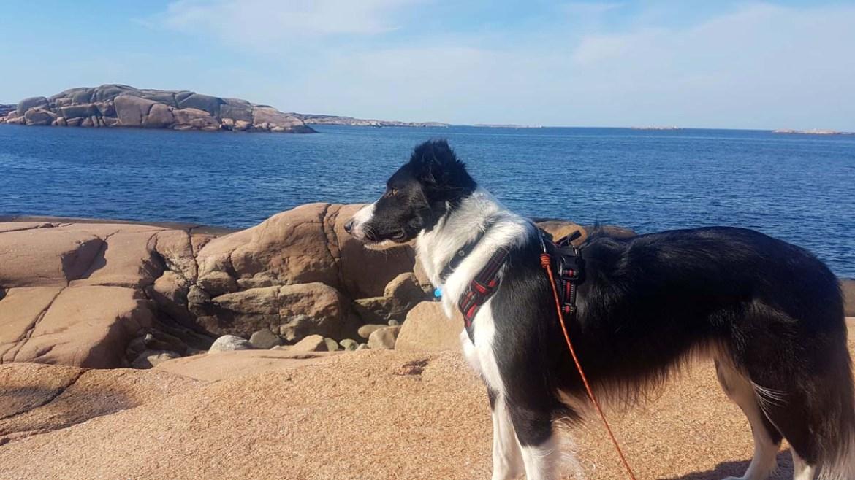 Visiter des réserves naturelles suédoises avec son chien