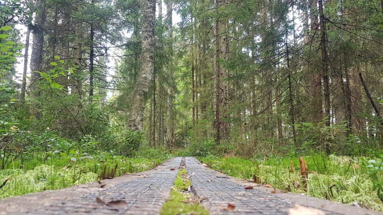 Sentiers du parc national de Store Mosse, Suède