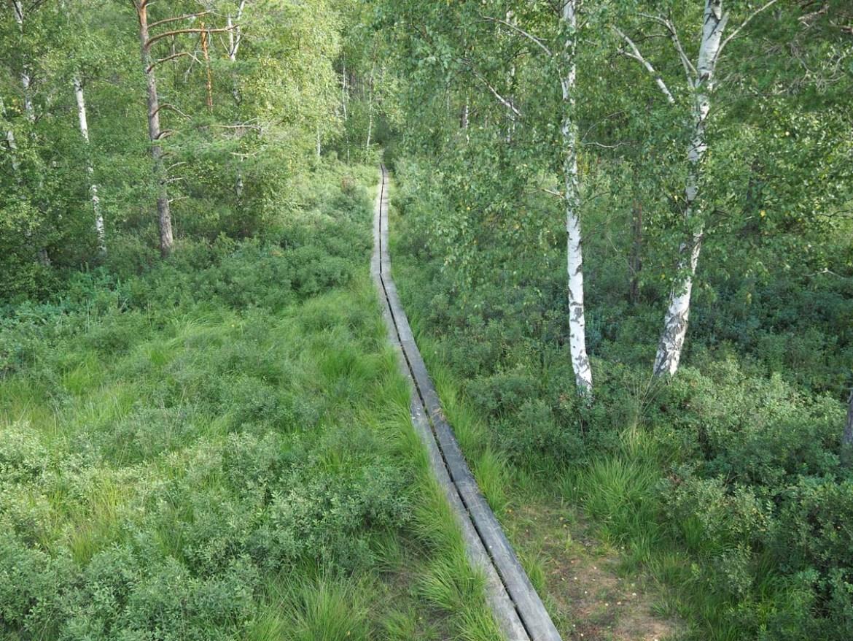 Marcher sur des planches dans une tourbières en Suède