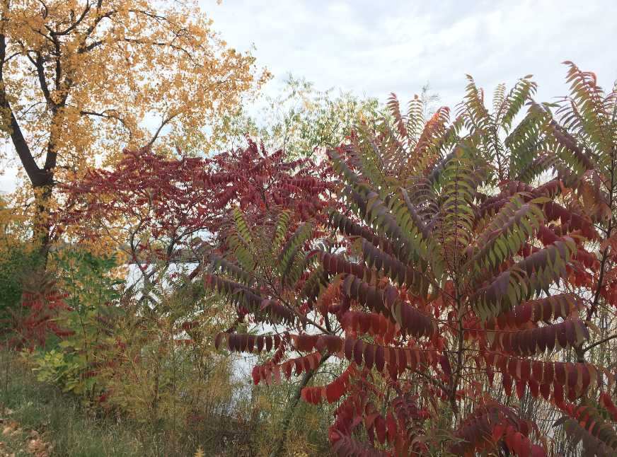 twin cities fall colors