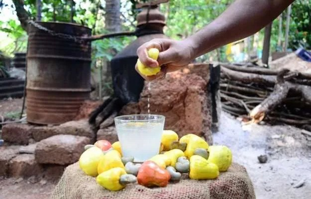 Feni Indian tradition of Goa