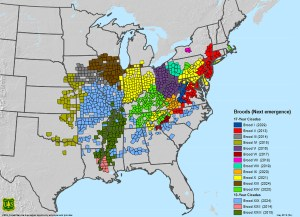 Map of Active Periodical Cicada Broods of the United States Andrew M. Liebhold, Michael J. Bohne, and Rebecca L. Lilja USDA Forest Service Northern Research Station and Northeastern Area State & Private Forestry, May 2013