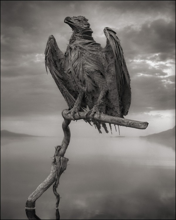 CalcifiedFishEagle-600x750[1]