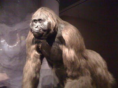 Gigantopithecus-blackii[1]