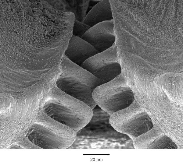 Engrenagens-de-insetos[1]