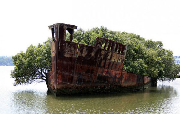 navio-floresta-2-descubra-o-verde[1]