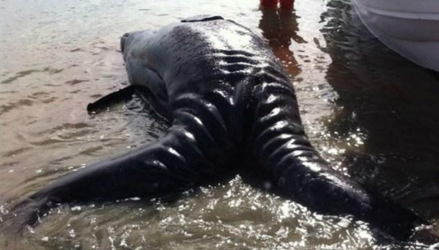 baleias02[1]