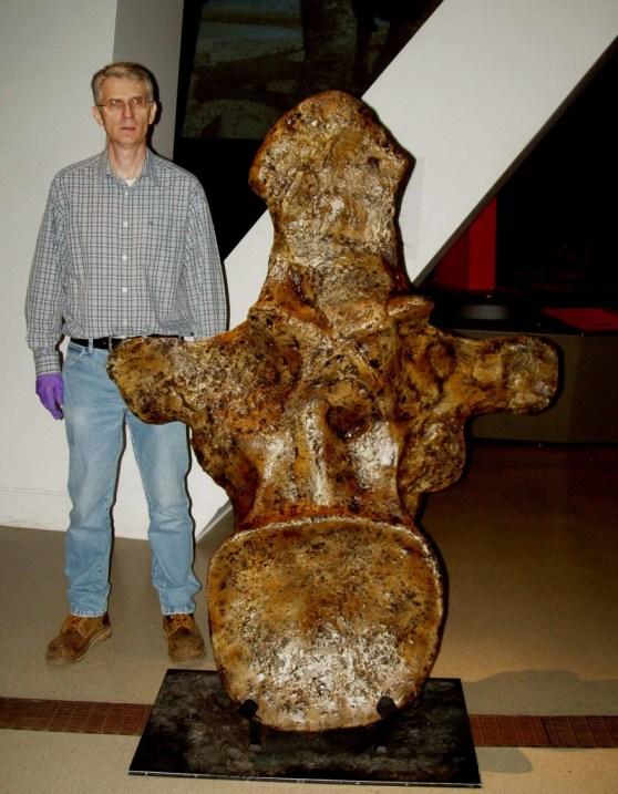 Vértebra de um Argentinossauro
