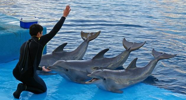 De-onde-vem-os-golfinhos-de-parques-marinhos-2-animal-planet[1]