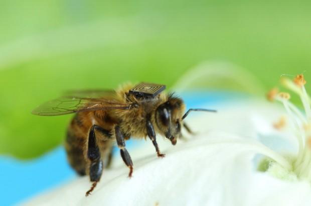 bee-on-white-flower[1]