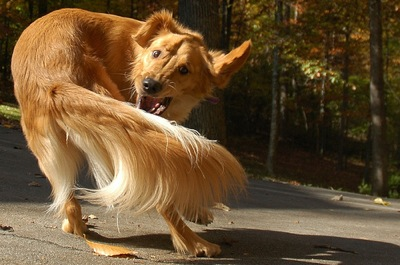 cachorro-rabo[1]