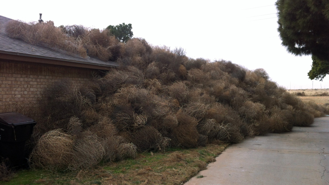 Tumbleweeds Everwher