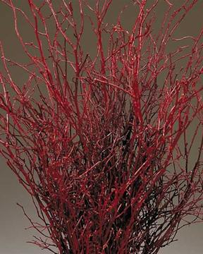 sweet-huck-branches-fire-red_MED