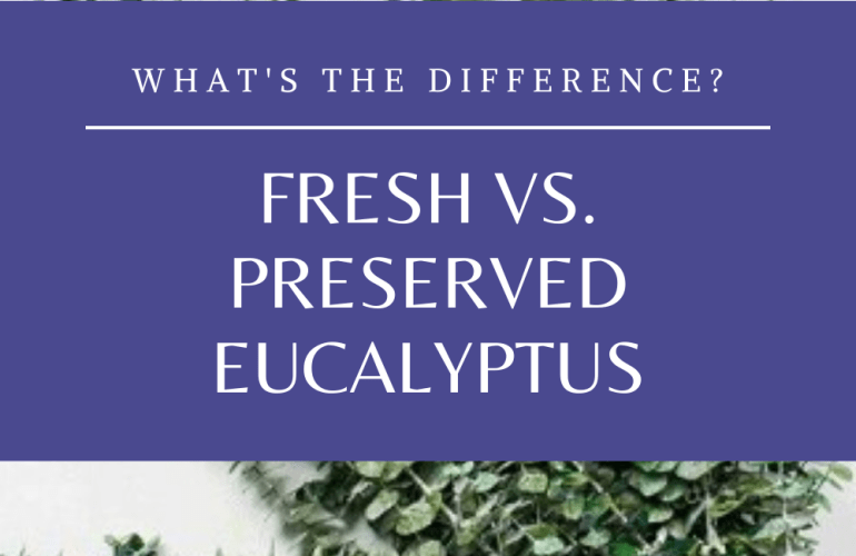 fresh vs preserved eucalyptus