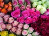 Types of roses