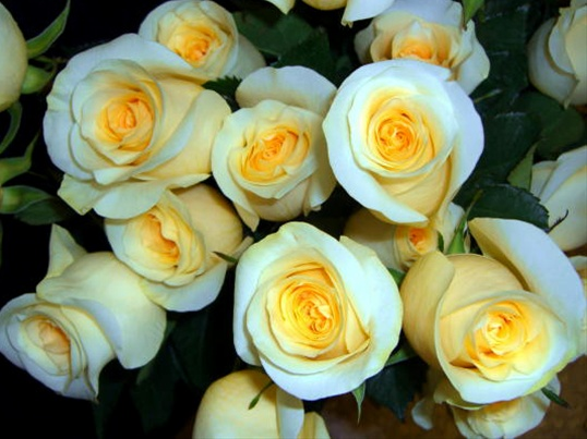 Peach rose- charm and thoughtfulness