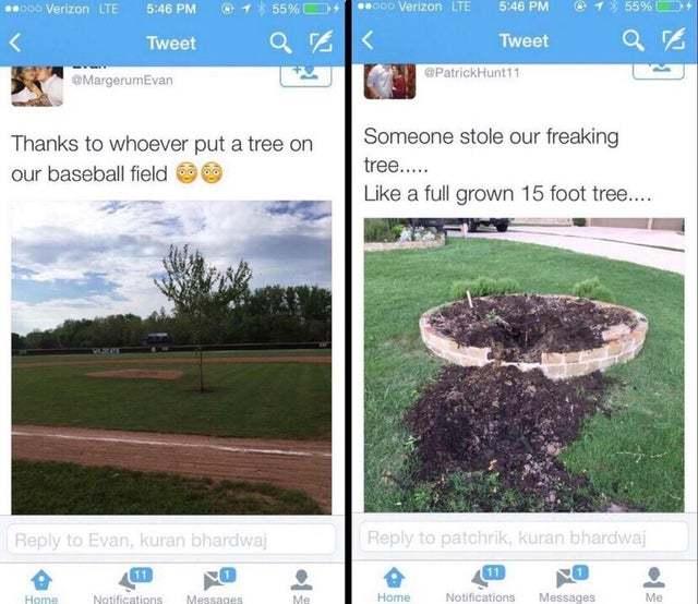 tree stolen