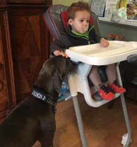 Maximus begging from a child - April 2015 Litter