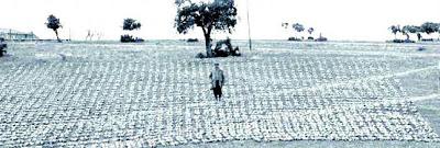 Franco rodeado de perdices