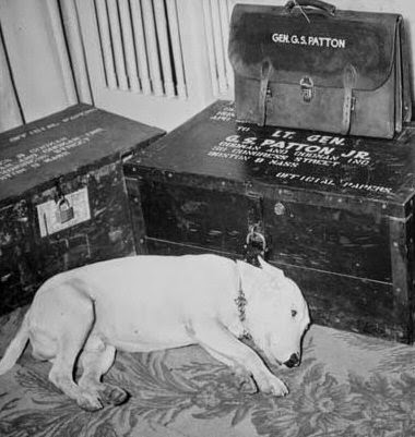 Willie, el bull terrier del general Patton