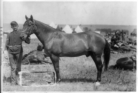 Un caballo llamado Comanche y la batalla de Little Bighorn
