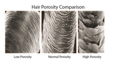 Everything You Wanted To Know About Hair Porosity Curlsandbeautydiary