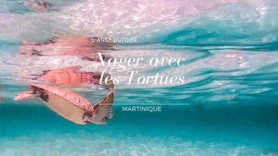 Nager avec les Tortues de l'Anse Dufour en Martinique 🐢