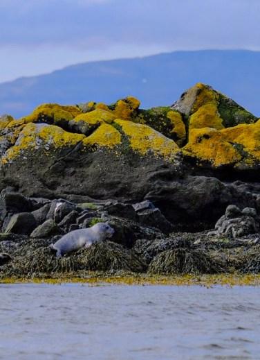 les phoques de beach seals