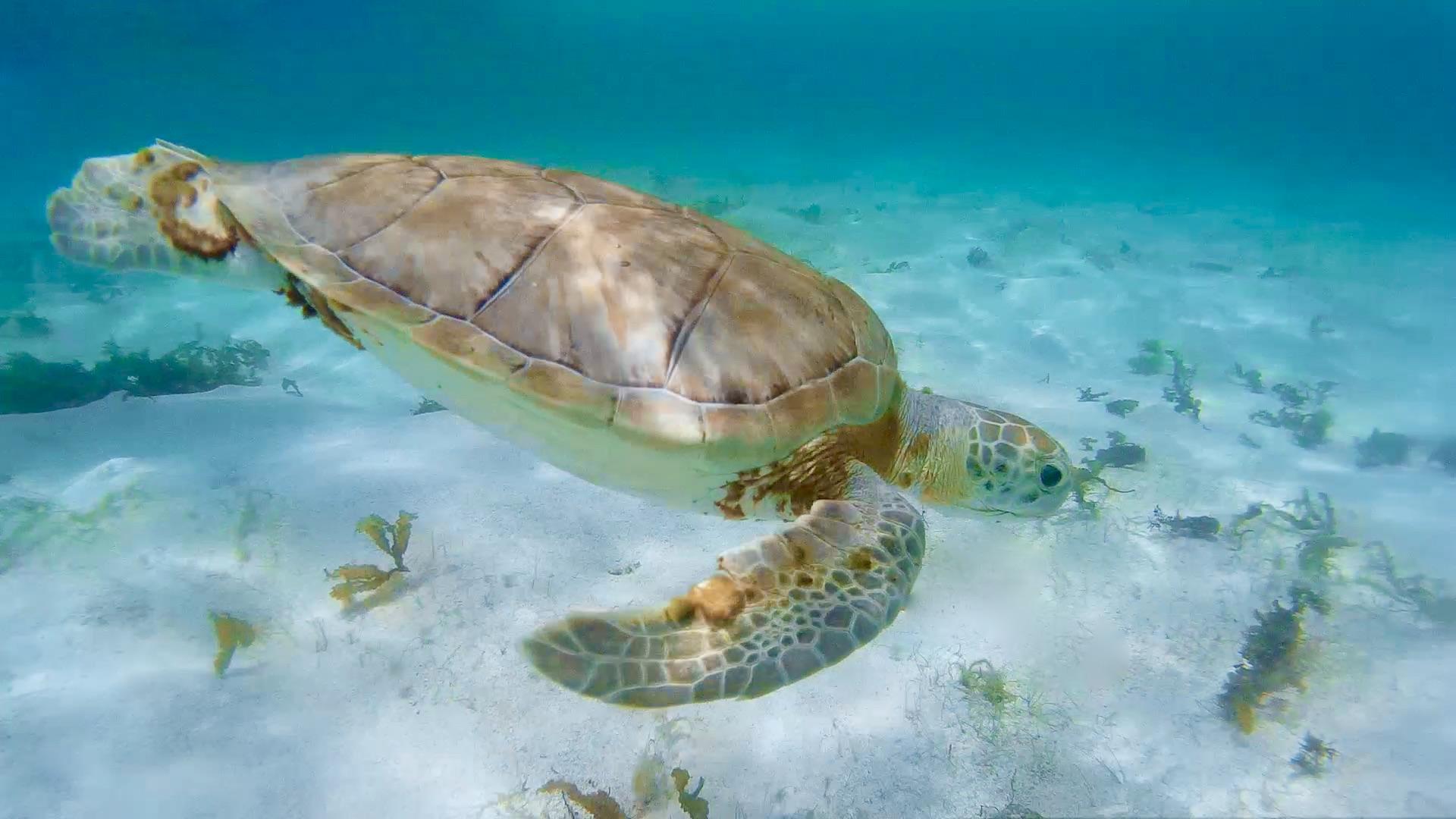 Tortue marine - Snorkeling a l'île de la petite terre guadeloupe