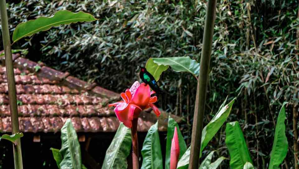 Martinique - jardin de balata - colibris