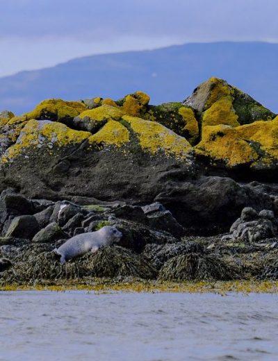 beach seals