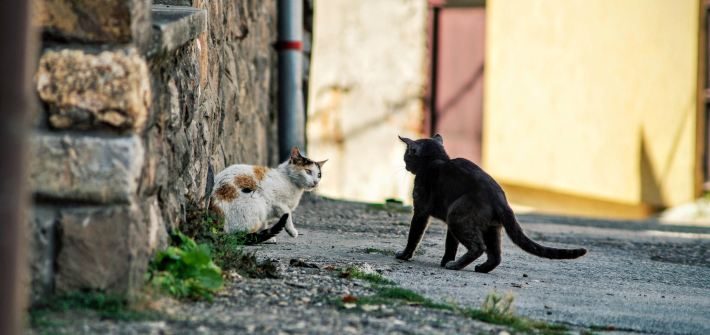 cat fights in an alley