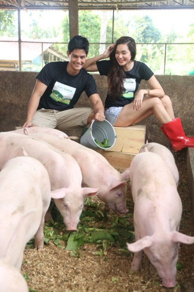 Healthy Options organic pigs live comfortably, in a stress-free environment that lets them exhibit natural instincts like rooting or scratching. They are raised without antibiotics or growth hormones.