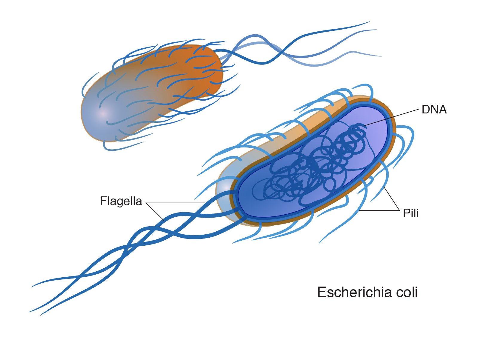 10 Major Differences Between Archaea And Bacteria
