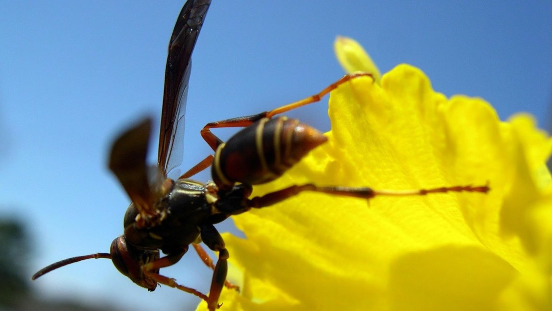 How to Keep Wasp Away from Your Homes