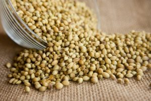 Coriander for curries